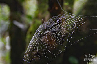 Spider, Nature, Knuckles, Sri Lanka, Knuckles Mountain Range, Wildlife, Animals, TravelSrilanka, VisitSrilanka, Trekking Sri Lanka, Hiking Sri Lanka, Trekking, Hiking, Adventure, Conservation, Holiday, Lodge, Camp, Guiding, Walks, Ecotourism, Qual
