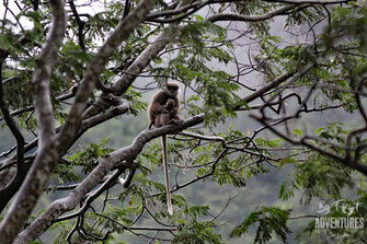 Mammals, Nature, Knuckles, Sri Lanka, Knuckles Mountain Range, Wildlife, Animals, TravelSrilanka, VisitSrilanka, Trekking Sri Lanka, Hiking Sri Lanka, Trekking, Hiking, Adventure, Conservation, Holiday, Lodge, Camp, Guiding, Walks, Ecotourism, Qualified