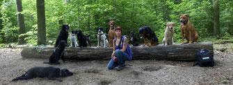 Tamara Stoner, Fellnasen-Express, berlin mit hund, Melanie Knies, Hundeabenteuer, Hundekrimi, Hundewanderung, Hundeschule