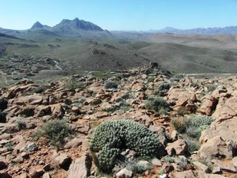 Biotope présaharien (E. belemia altamontanus), étage altimontain du Djebel Akoumbi, Anti-Atlas sud-occidental, 2017, ©Frédérique Courtin-Tarrier