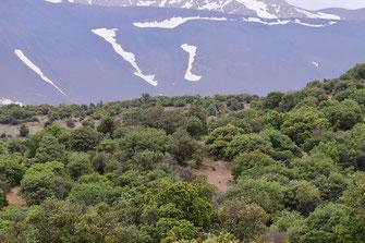 Localité à I. debilitata, Djebel Ayachi, Haut Atlas nord-oriental, 2018, ©Frédérique Courtin-Tarrier