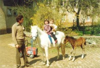 Sissi mit Fohlen und Familie Müller, Mama steht hinter der Kamera