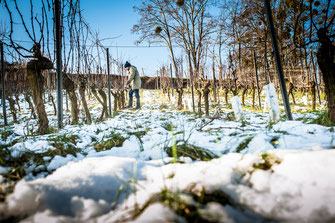 Weinbergsarbeit im Winter