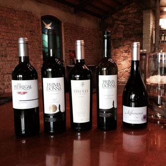 Pedregal Tannat Tannat Pedregal Prima Donna Osiris Mburucuya Uruguay Wein Rotwein Neue Welt Südamerika