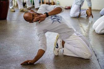 Mestre Pernalonga CDO