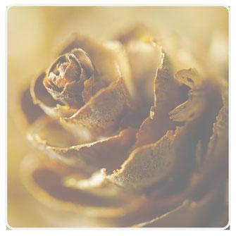 Grafik Rose braun metallic
