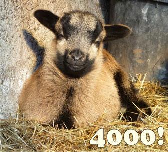 4000 Besucher!