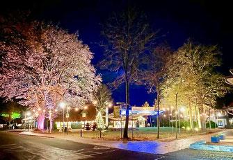 Die den Dorfplatz rahmenden Bäumen werden von Lichtern angestrahlt und leuchten in der Nacht.