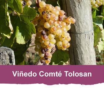 Viñedo de Comté Tolosan (Vic-Bilh)