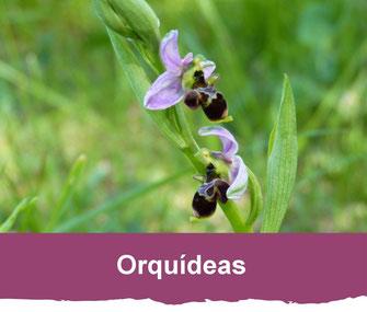 orquideas vic-bilh madiran