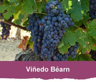 Viñedo de Béarn (vic-bilh)