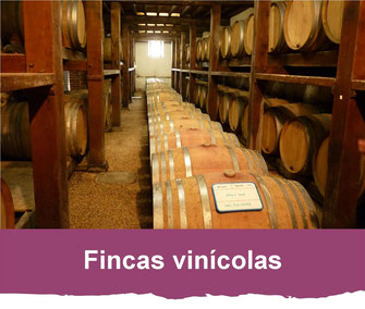 fincas vinicolas Madiran Pacherenc du Vic-BIlh