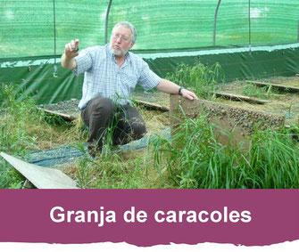 granja de caracoles lannecaube vic-bilh madiran