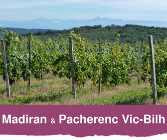 Viñedo de Madiran y Pacherenc du Vic-Bilh
