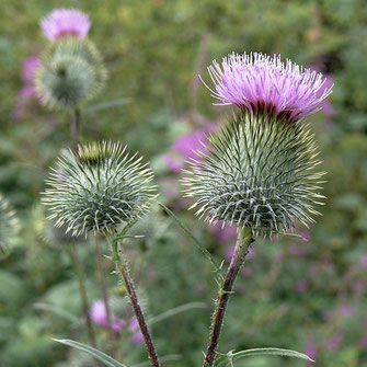 Radiant Reality Blog | 5 Ways To Spring Clean Your Liver | Milk Thistle