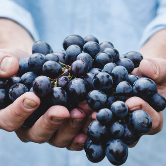 Radiant Reality Blog | Neurogenesis | Resveratrol