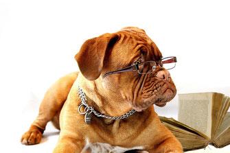 Hundeschule Pfotencampus