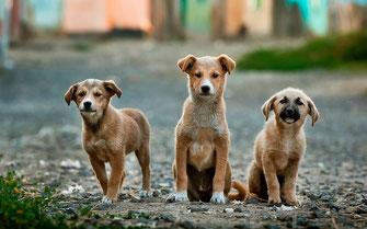 Für jeden Hund egal welches Alter Social-Walk