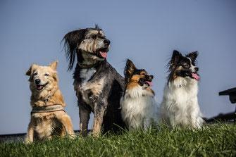 Social-Walks & Rudelspaziergänge für jeden Hund