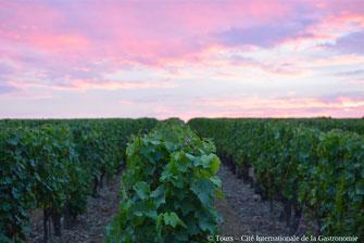 balade-dégustation-insolite-crépuscule-vignoble-oenologie-Vouvray-Touraine-Vallee-Loire-Rendez-Vous-dans-les-Vignes-Myriam-Fouasse-Robert