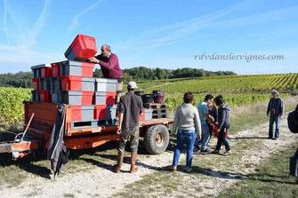journée-vendanges-main-manuelles-Vouvray-Touraine-Vallée-Loire-Rendez-Vous-dans-les-Vignes-Myriam-Fouasse-Robert