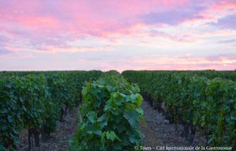 crépuscule-sortie-vin-degustation-activite-insolite-vignoble-Vouvray-Tours-Amboise-Touraine-Vallee-Loire-Rendez-Vous-dans-les-Vignes-Myriam-Fouasse-Robert