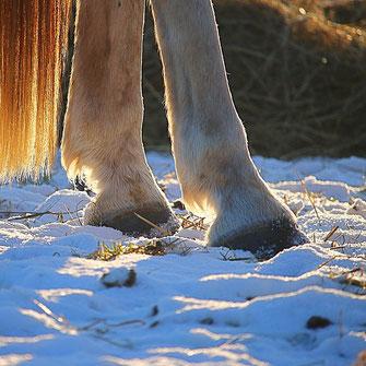 Pferdehufe im Schnee