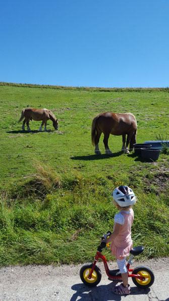 Rügen Natur Pferde Wanderung