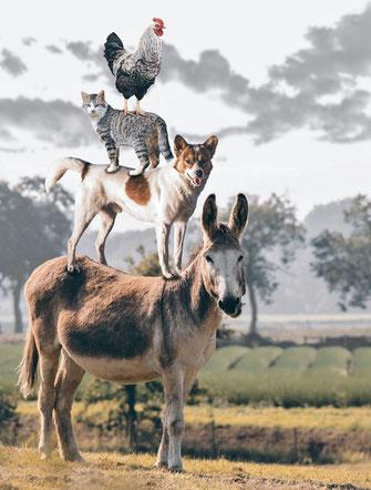 Die neuen Bremer Stadtmusikanten mit Esel, Hund, Katze und Hahn.
