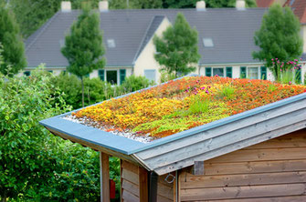 Schrägdach Bepflanzung Dachbegrünung