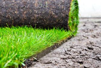 Rasenpflege Rollrasen Rasen