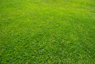 Rasen grün Pflege Rasenmähen
