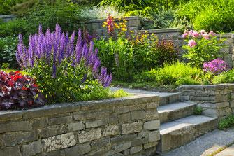 Bepflanzung Natursteinmauer Treppe