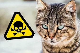 Giftiges für Katzen