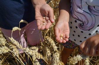 Wo kommt das Essen her? Unsere Kinder lernen den Weg vom Korn zum Brot kennen
