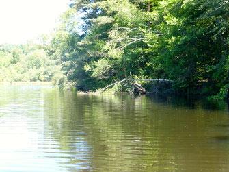 pêche de la carpe à la grande canne