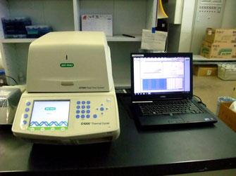 BioRad CFX96 RealTime System