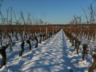 Actualités sur nos vins de Saint Nicolas de Bourgueil