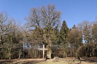 Traubeneiche am Fürstengrab im Büdinger Wald