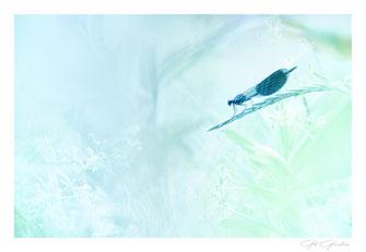 """Série """" Aqua Nature """""""