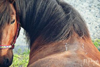 Dry Needling Pferd