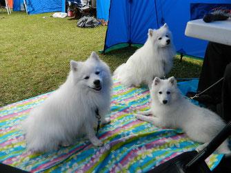 Tendo , Yuki och Lowii