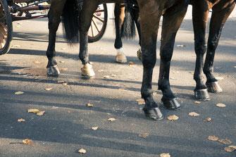 Pferdekutsche – minalux | Intuitive Hochzeitsfotografie von Mina Esfandiari