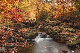 landschapsfotografie: Belgische Ardennen in de herfst!