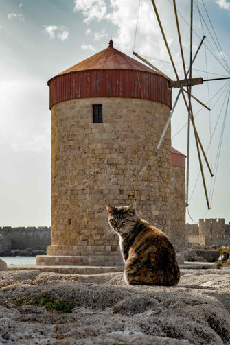 Rhodos rodos Griechenkand Katze