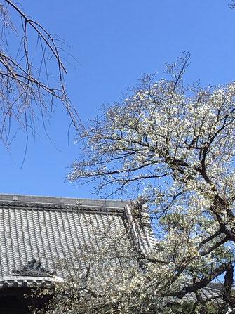 3 月 24 日の密蔵院本殿