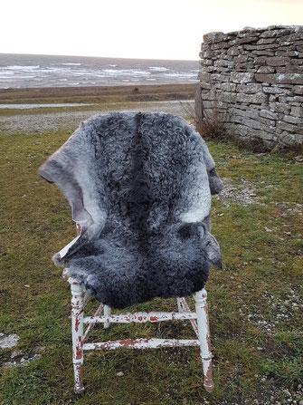 Lockiges Lammfell, Gotlandfell. irrlichtjaeger