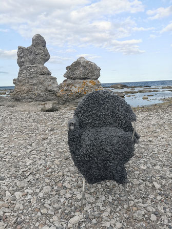 Gotland Lammfell am Wasser