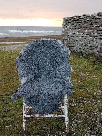 Gotland Schaffell , irrlichtjaeger