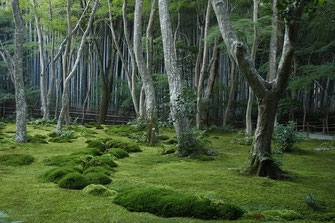 Moss Temple, Kyoto, Japan